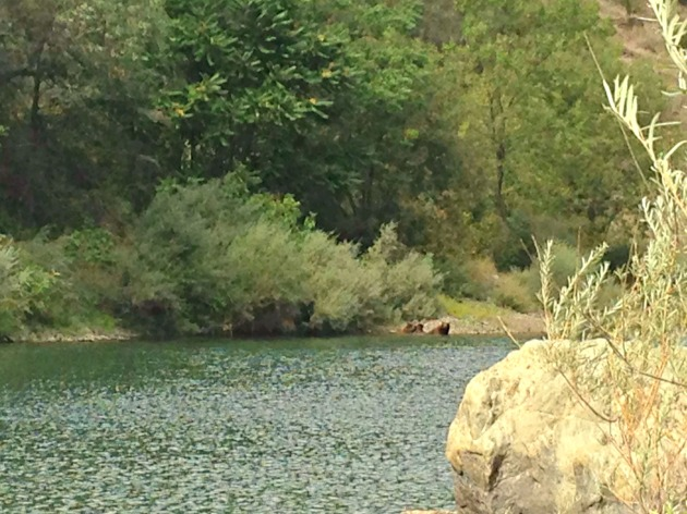Clarks Pool Bears