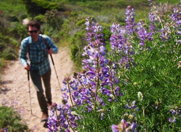 Jarrett Wildflowers